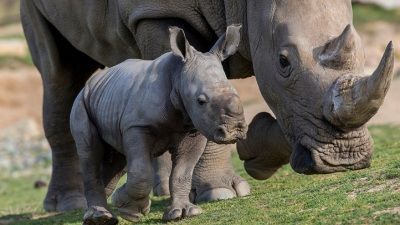 Escondido Fundraiser: World Rhino Day