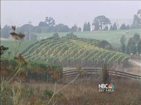 http://media.nbcbayarea.com/images/KNTV_Marijuana_the_Cash_Crop_102010_00_mezzn_640x480.jpg