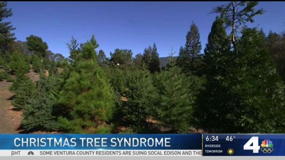 Allergic to Christmas? Some Say Trees Cause Reactions - NBC ...