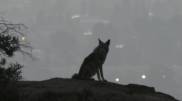 Coyote sightings and wildlife workshops nbc southern california coyote sightings and wildlife workshops reheart Gallery