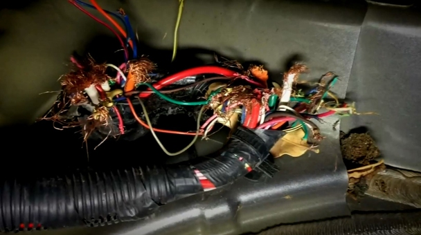 Class Action Lawsuit Alleges Rodents Chewing Car Wiring