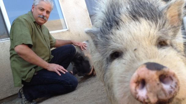 Pot-Bellied Pig Stench Causes Neighborhood Ruckus