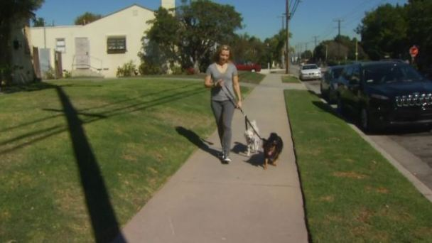 Woman's Pet Insurance Claim Leads to Headache and Ridicule