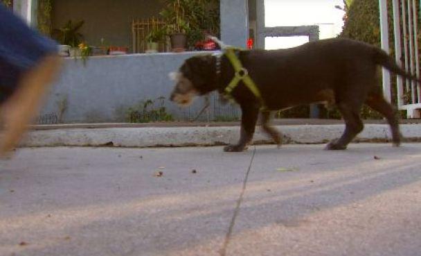 Woman Devastated After Dog Adoption Denied