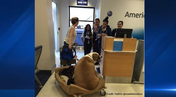 Debate Over What Defines a Service Animal