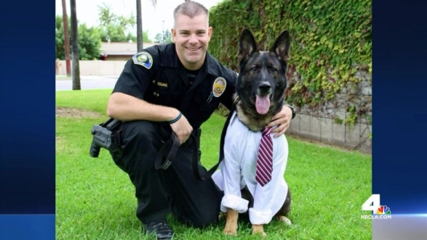 [LA] Police K-9 Recovers From Surgery After Gunshot Wound