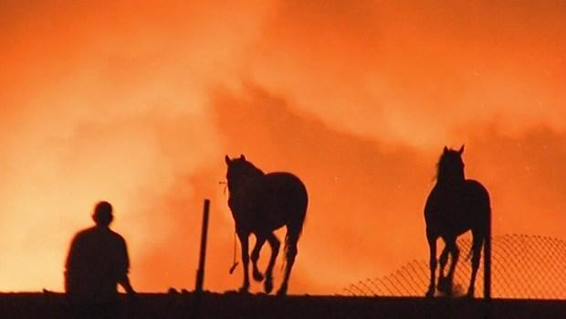 PHOTOS: Vast Brush Fire Burns Near Prado Dam