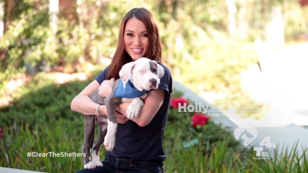 [LA] Join NBC4 and Telemundo 52 to Clear the Shelters on August 15