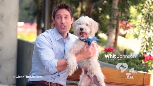 [LA] Adopt a Pet on Clear the Shelters on August 15 with NBC4 and Telemundo 52