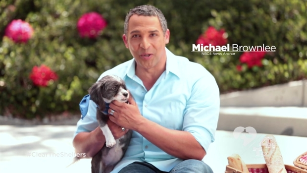 [LA] NBC4 and Telemundo 52 Announce Clear the Shelters Pet Adoption Initiative