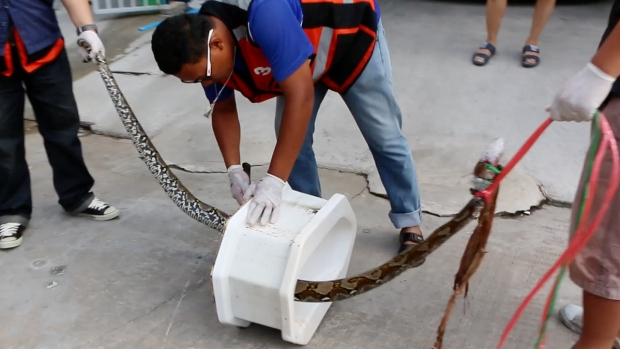[NATL] Thai Man Bitten By Python Who Emerged From Toilet