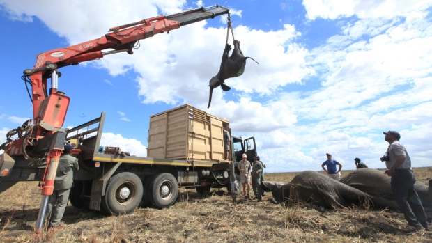 [NATL] 500 Elephants Knocked Out and Relocated to Sanctuary in Malawi