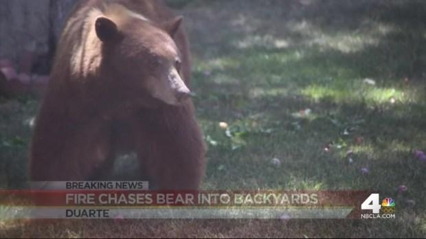 [LA] Bear Spotted at Base of Fire Near Duarte