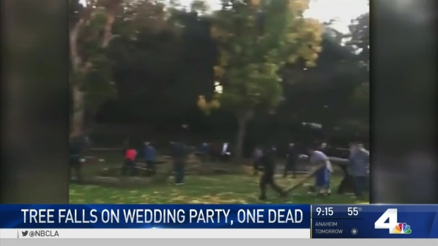 Woman dies after tree falls on wedding party