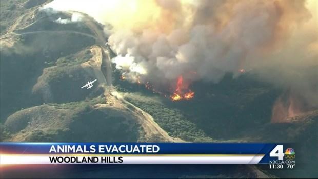 [LA] Owners Claim Animals Evacuated After Calabasas Blaze