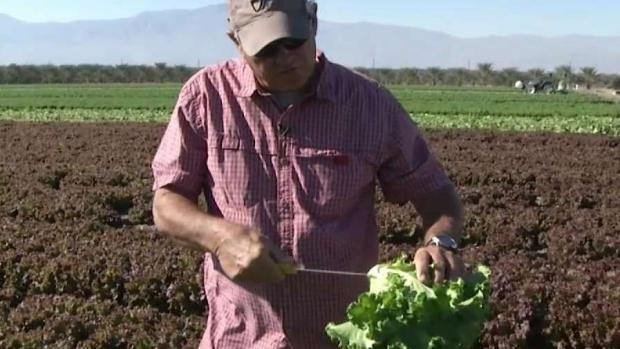 [LA] California Growers Halted by E. Coli Outbreak
