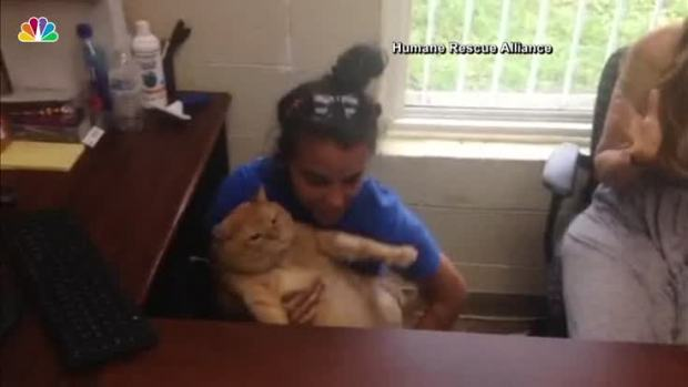 [NATL] Overweight Cat Finds Forever Home