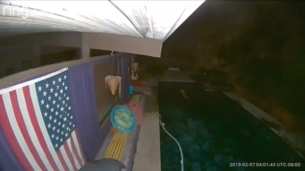 [LA] Watch: Mountain Lion Chases Deer Into Pool at Glendale Home