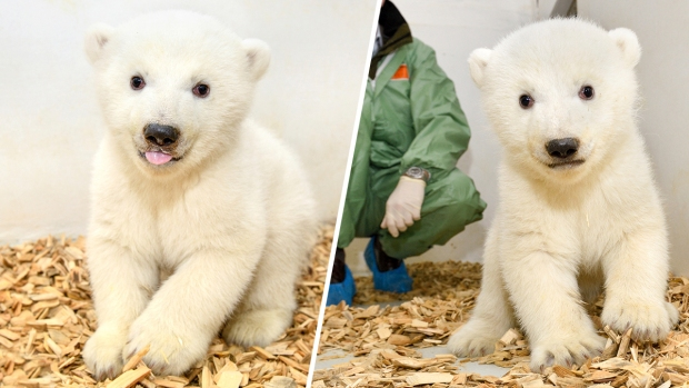 [NATL] Adorable Zoo Babies: Baby Polar Bear at Berlin Zoo