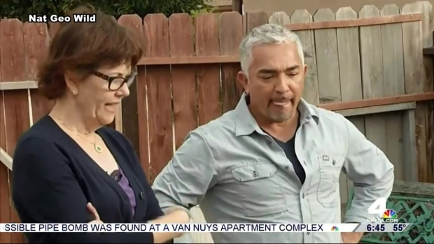 [LA] 'Dog Whisperer' Cesar Millan Under Investigation