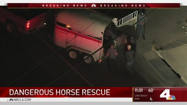 [LA] Firefighters Rescue Horse Trapped in Hole in the Ground