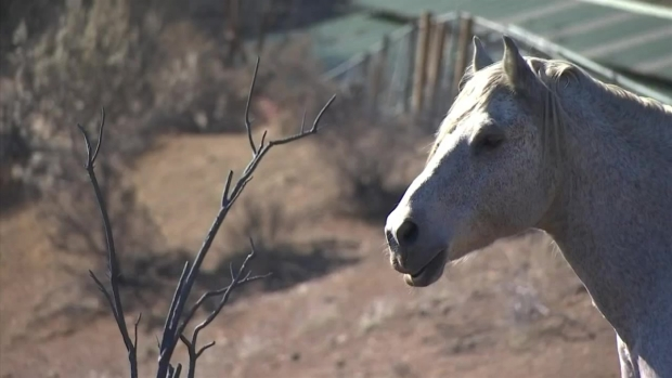 [LA] Horse Stands His Ground in the Woolsey Fire