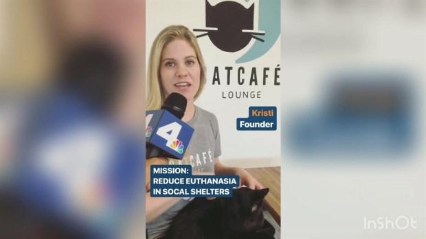 [LA] Aliya Jasmine Visits the Cat Cafe on Instagram