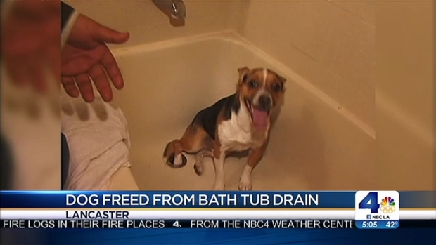 [LA] Firefighters Spend 4 Hours Rescuing Dog Stuck in Bathtub