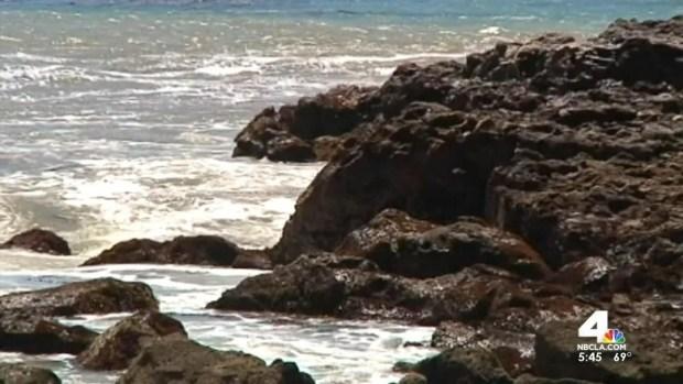 [LA] Experts: Shifting Food Sources Killing Local Sea Lions