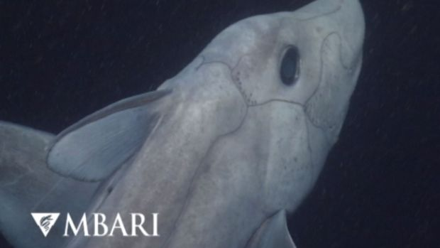 [DFW] Cameras Capture Rare 'Ghost Shark'