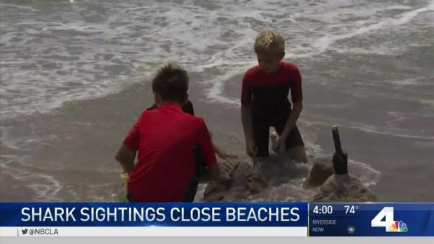 [LA] San Clemente Beach Reopened After Shark Sightings
