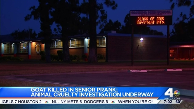 [LA] Senior Pranks Investigated After Possible Animal Cruelty
