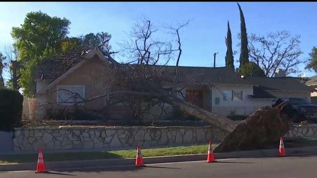 [LA] Strong Winds Cause Tree to Fall on House