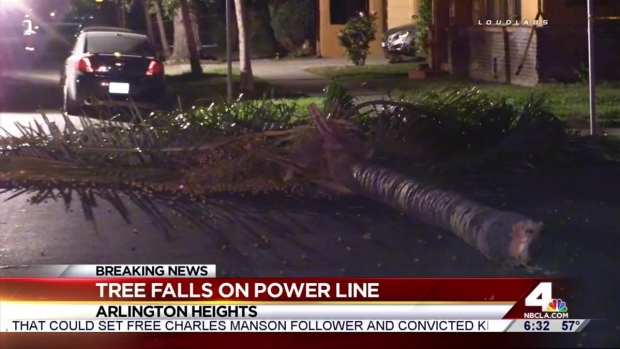 [LA] Strong Winds Topple Trees, Cause Damage in SoCal