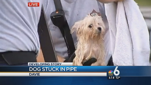 [MI] Dog Rescued From Pipe in Davie