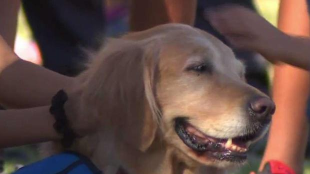[NATL-LA] Therapy Dogs Help Community Cope After Mass Shooting