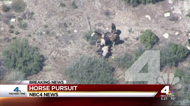 [LA] Deputies Beat Man After Horse Chase