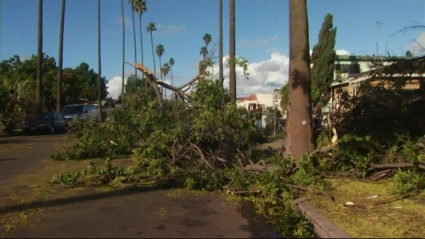 [LA] Tornado Winds Knock Down Trees in South LA