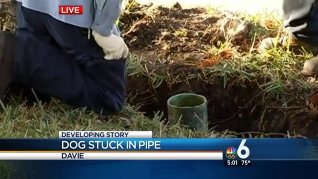 [MI] Dog Stuck in Pipe in Davie