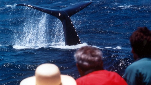 First Blue Whale of Season Spotted