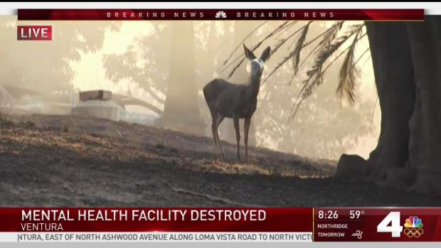 [LA] Wildlife Forced Into Residential Area Amid SoCal Fires