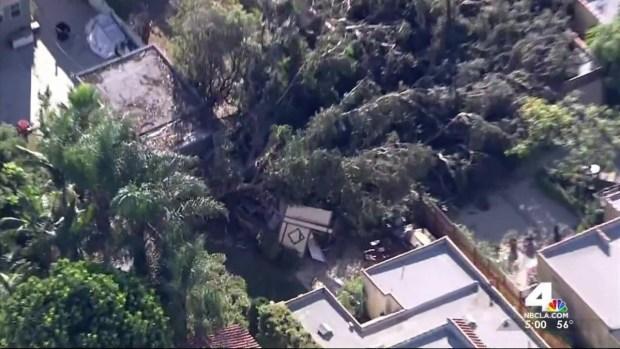 [LA] Winds Wreak Havoc, Down Trees