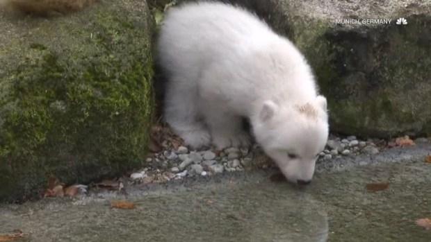 [NATL] Recently Born Zoo Animals