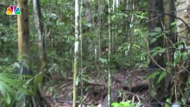 [NATL] Brazilian Indigenous Man Chops Down a Tree in the Amazon, Rare Footage Shows