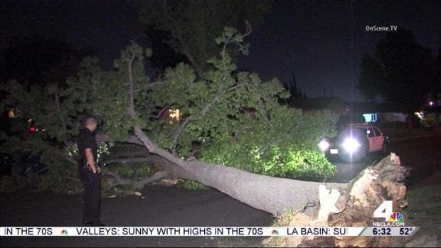 [LA] Powerful Winds Topple Tree