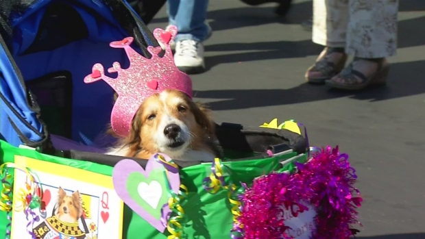 Doggie Mardi Gras Takes Over Rancho Santa Fe Farmer's Market