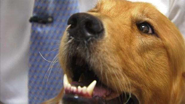 [LA] Dog Suffers Third Degree Burns