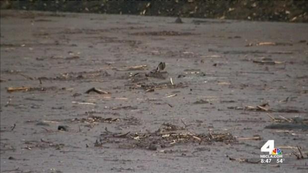 [LA] Caught on Camera: Deer Slogs Through Mud