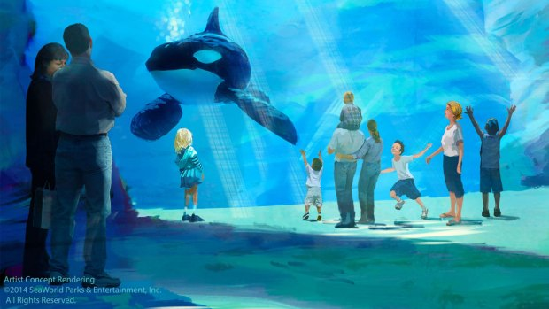 Images: Changes Coming for SeaWorld San Diego's Orca Exhibit