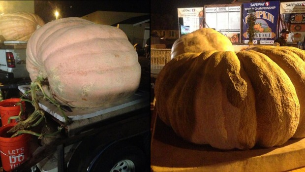 [BAY] Heavyweight Pumpkins Compete in Half Moon Bay Weigh-Off